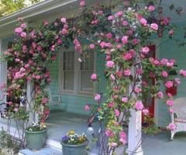 Backdrops Rose Arbor On Porch 2071278 Weddbook