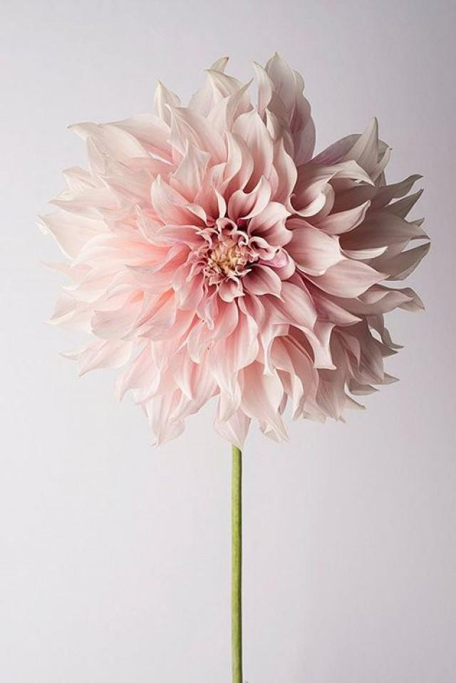 Bouquet Flower Odds Ends Spring Flower Guide 2480099 Weddbook