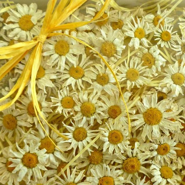 100 small white daisies yellow and white dried daisies for Dried flowers craft supplies