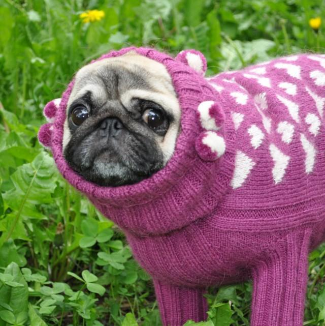 Dog Sweater Knit Dog Sweater Sweater For Pug Clothing For